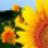 向日葵排课软件