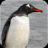 101企鹅宠物