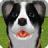 宠物狗2006
