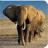 非洲野生动物拼图