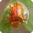 宝藏岛之金甲虫