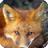 神秘的梦之红狐事件