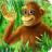 猴子的朋友