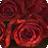 2012情人节Windows官方主题壁纸:玫瑰